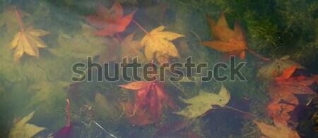 Leaves Underwater Banner Stock photo © suerob