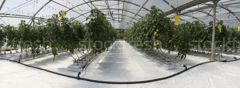 Stock photo: Inside the greenhouse