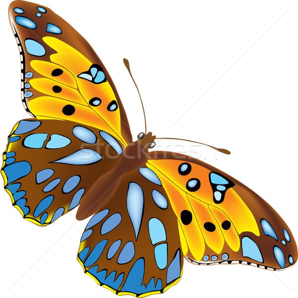 бабочка полный подробный коричневый синий Места Сток-фото © Suljo