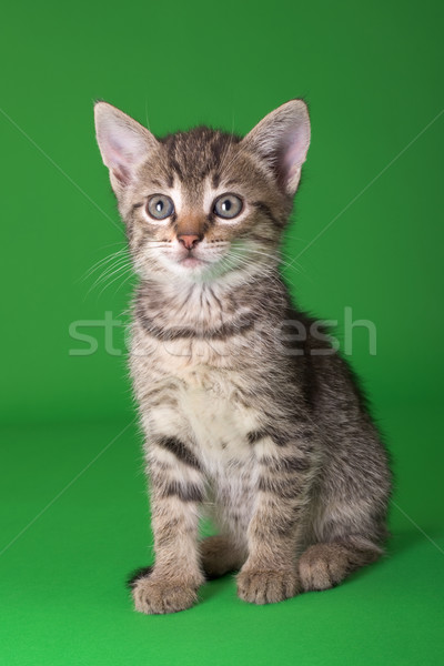 Kat geïsoleerd groene dier huisdier Stockfoto © Suljo