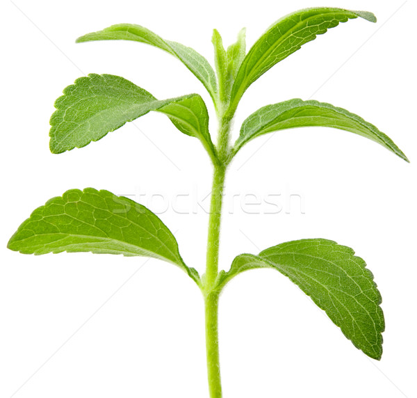 Stevia plant cutout Stock photo © Suljo
