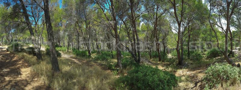 Middellandse zee bos panorama pine panoramisch Stockfoto © Suljo