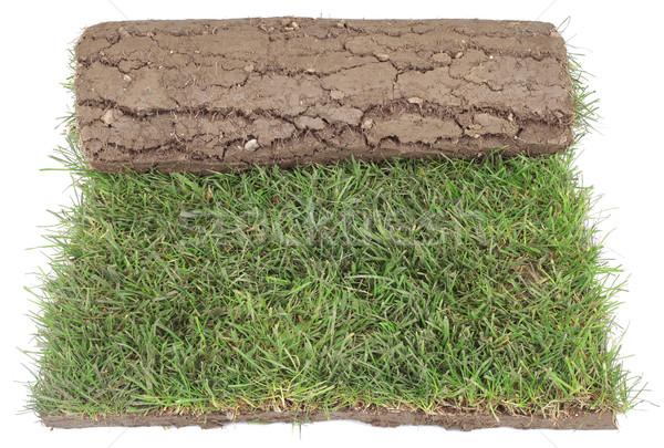 Gras tapijt rollen landscaping geïsoleerd Stockfoto © Suljo
