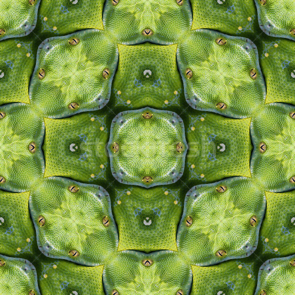 Reptilian Skin Pattern Stock photo © Suljo