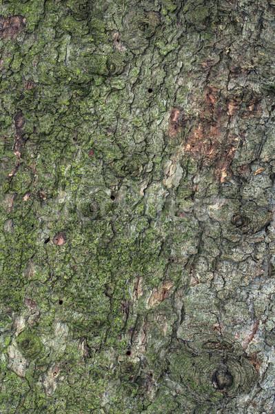 松樹 質地 樹皮 宏 松樹 沒有人 商業照片 © Suljo