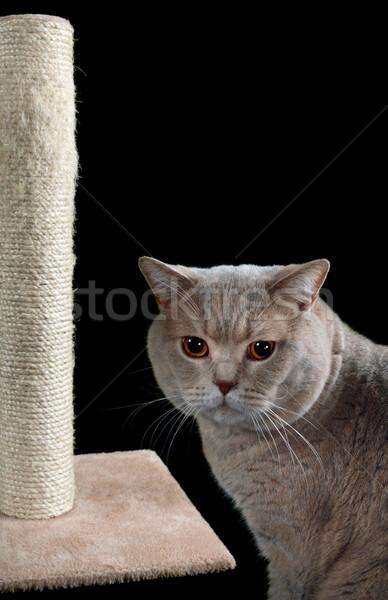 Cat Scratching Post Cutout Stock photo © Suljo
