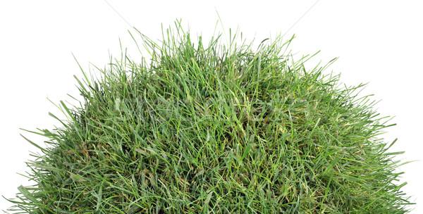 Grasachtig heuvel klein gras geïsoleerd Stockfoto © Suljo