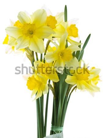 Narcissus Bouquet Stock photo © Suljo