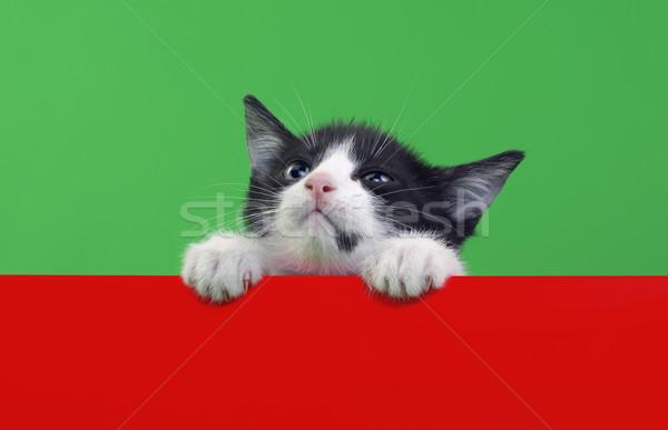 Pequeño gato doméstico aislado verde rojo Foto stock © Suljo