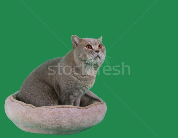 Cat in the Catnap Cutout Stock photo © Suljo