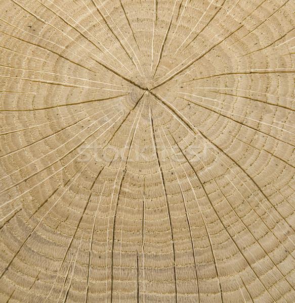 木製 コア 木材 ツリー ストックフォト © Suljo