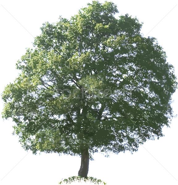 Chêne graphique branche croissance chêne Photo stock © Suljo