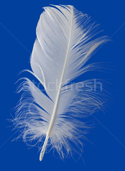 White Feather Cutout Stock photo © Suljo