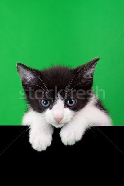Pequeño gato doméstico verde negro cara Foto stock © Suljo
