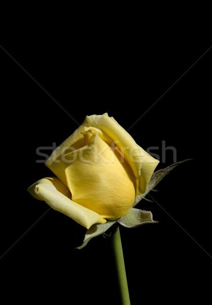 закрывается желтый изолированный черный цветок красоту Сток-фото © Suljo