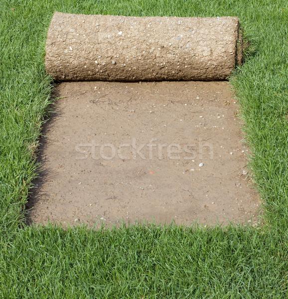 Grass Carpet Cover Stock photo © Suljo