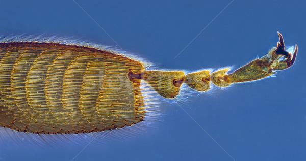 Bee leg Stock photo © Suljo
