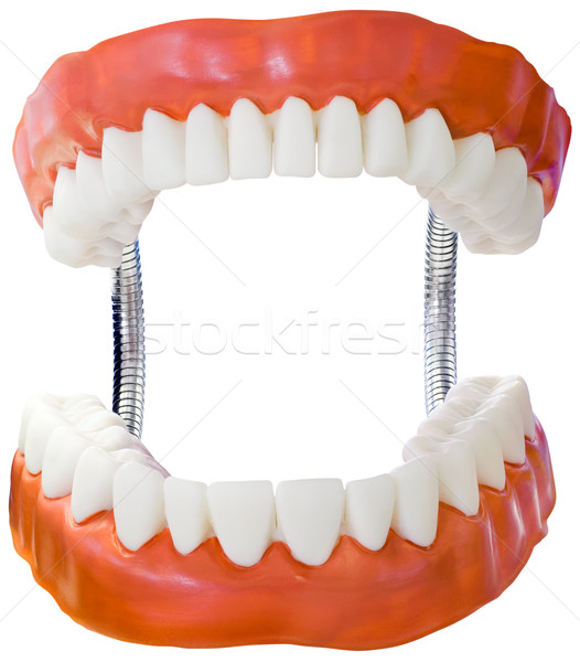 Denture Model Cutout Stock photo © Suljo