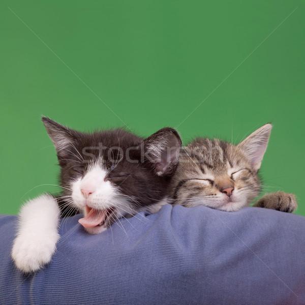 Dreamy Cats Stock photo © Suljo