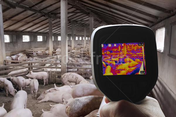 Thermal Image of Pig Farm Stock photo © Suljo