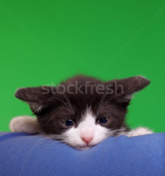 Gremlin Cat Cut Out Stock photo © Suljo