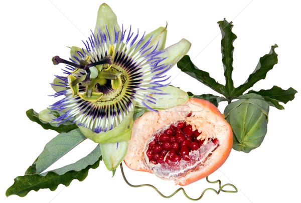 Passion fruit cutout Stock photo © Suljo