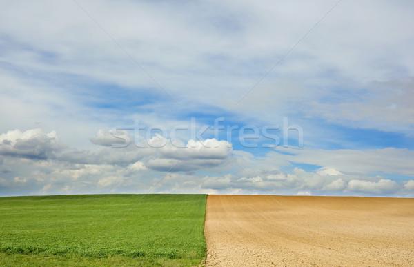 весны полях центр симметрия два различный Сток-фото © Suljo