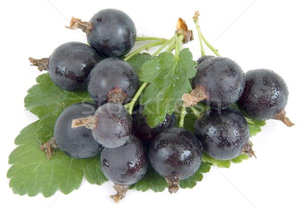 Noir velours nouvelle hybride groseille alimentaire Photo stock © Suljo