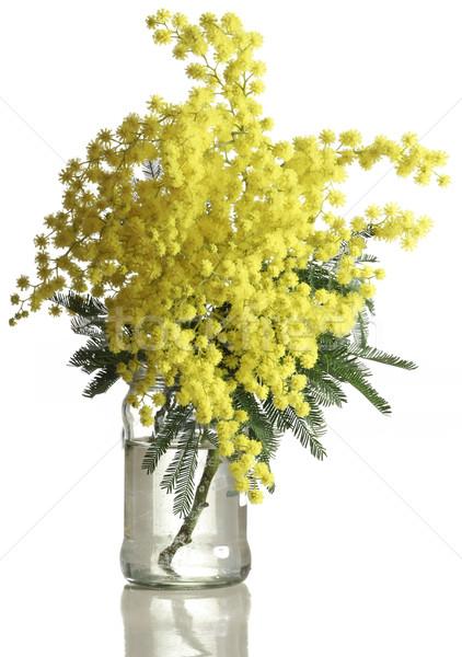 букет серебро изолированный белый цветок Сток-фото © Suljo