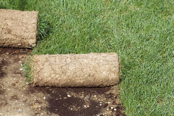 Grass Carpet Rolls Stock photo © Suljo