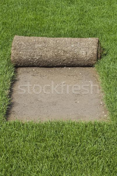 Grass Carpet Reel Stock photo © Suljo