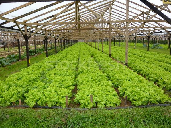 Сток-фото: салата · области · продовольствие · лист · растительное