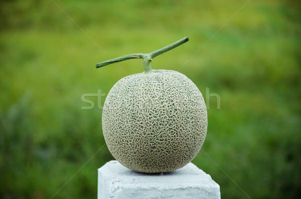 Japon kavun yeşil meyve Stok fotoğraf © sundaemorning