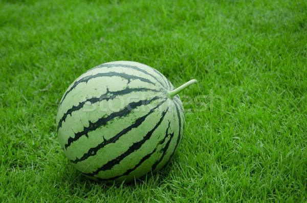 Karpuz şerit cilt biçim çim alanı Stok fotoğraf © sundaemorning