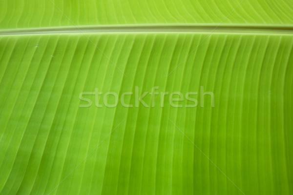 Muz yaprak doku Stok fotoğraf © sundaemorning