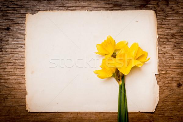 Nergis parça kâğıt sarı boş kağıt eski Stok fotoğraf © superelaks