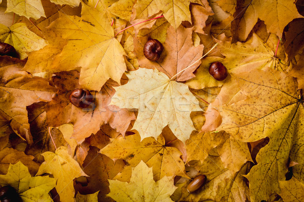 background with autumn leaves and chestnuts Stock photo © superelaks