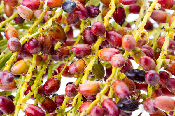 closed up of Palm seed bunch - riped Stock photo © supersaiyan3