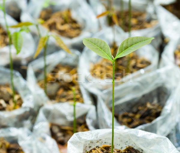 Kiemplant veel jonge vers plastic natuur Stockfoto © supersaiyan3