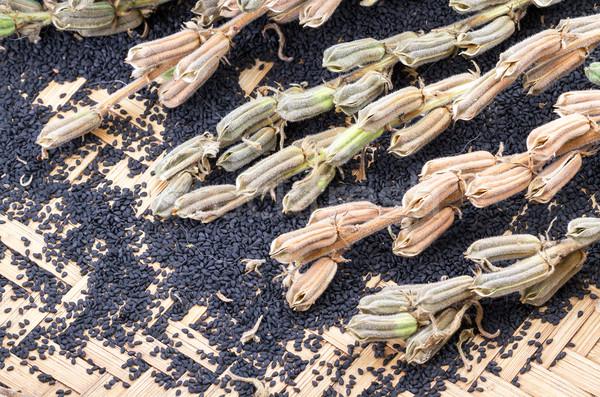 Planta bambu cesta fechado para cima Foto stock © supersaiyan3