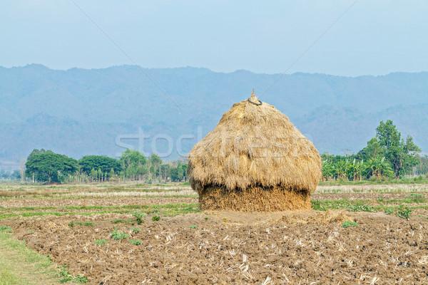 соломы сельский области трава Сток-фото © supersaiyan3