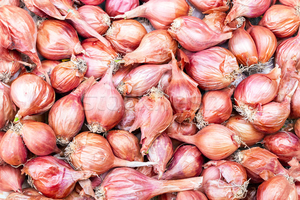 Shallot - Asia red onion - Allium ascalonicum. Stock photo © supersaiyan3