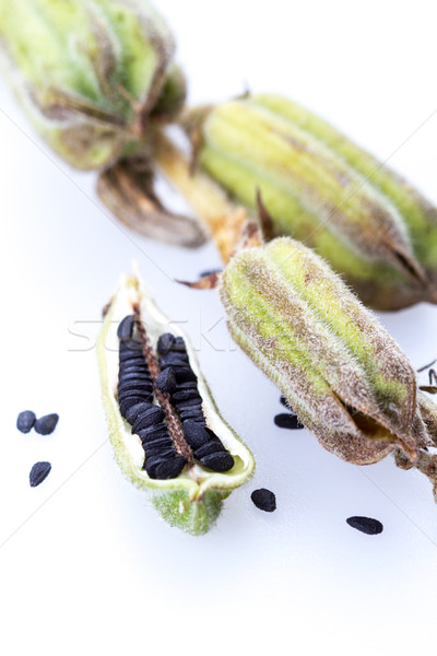 Planta preto gergelim fechado para cima branco Foto stock © supersaiyan3