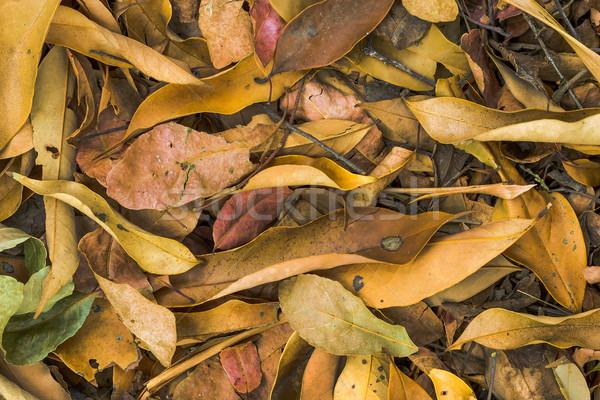 Gedroogd bladeren grond boom abstract natuur Stockfoto © supersaiyan3
