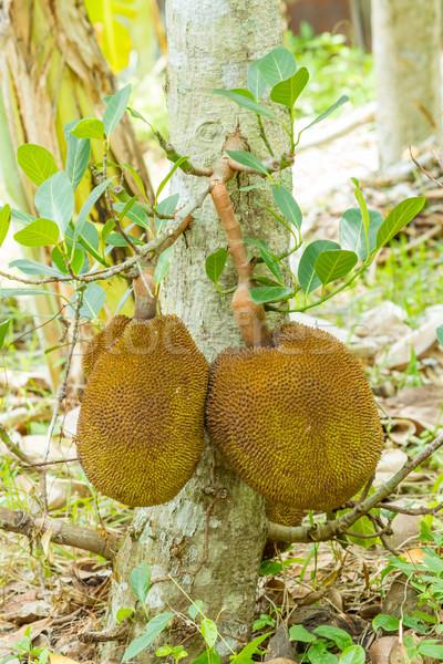 Fa levelek kert háttér gyümölcsök trópusi Stock fotó © supersaiyan3