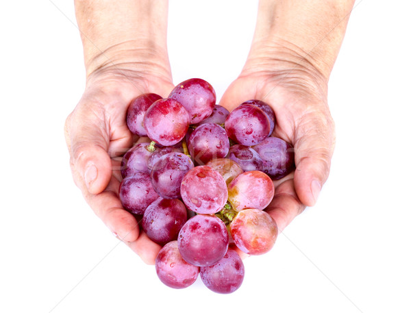 Bunch of red grape in adult hands on white background Stock photo © supersaiyan3