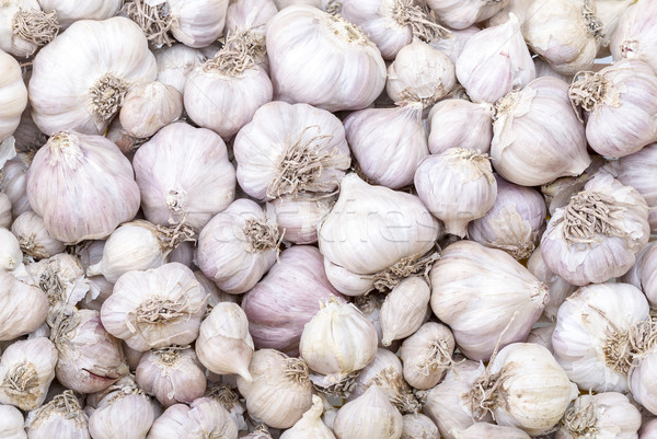 Garlic in market - Allium sativum Linn. 