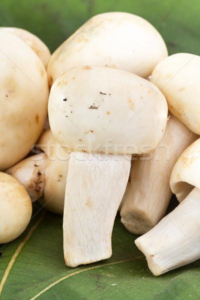 Greenish Mushroom or Green Agaric (Russula virescens Fr.) Stock photo © supersaiyan3