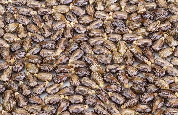 Castor oil seeds-ricinus communis Stock photo © supersaiyan3