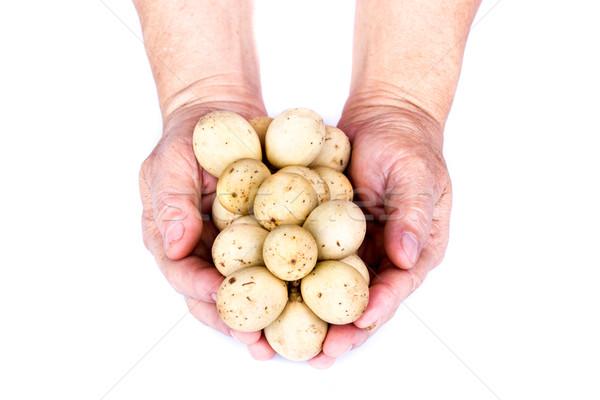 рук взрослый белый фон сельского хозяйства Сток-фото © supersaiyan3
